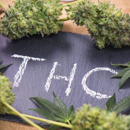 Cannabis Smoking Vs Edibles Effects